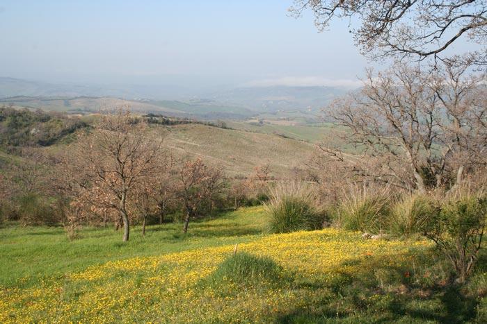 Maremma hills